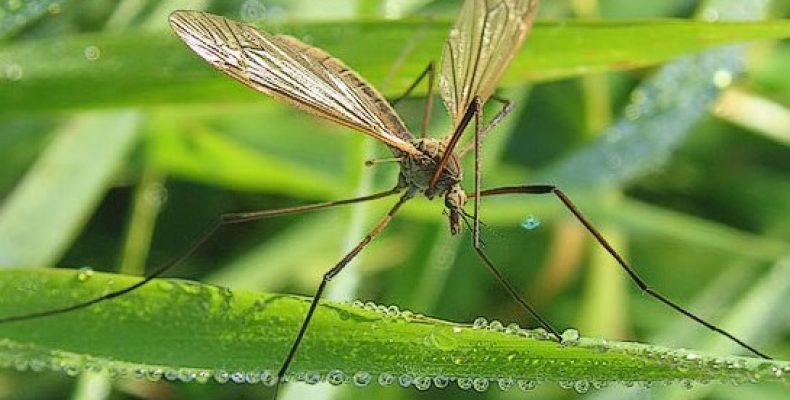 Американские военные изучали возможности использования комаров в качестве