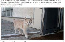 """Рогозин раскрыл тайну """"специально обученных котов"""" на авиазаводах"""