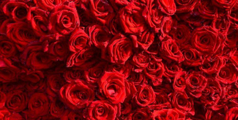 Где выгодно купить красивые розы