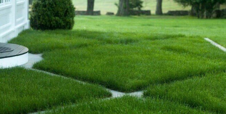 """Ландшафтный дизайн. Продажа и укладка рулонного газона от """"Газоны и Ландшафты"""""""