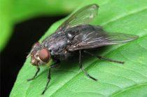 Обработка и уничтожение насекомых, мух от «Чикой-Сервис»